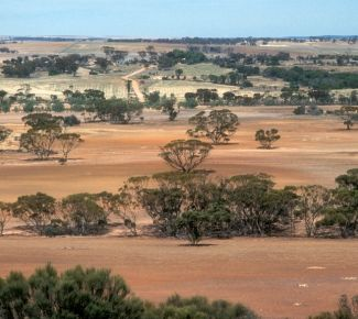 Grassroots strategy to address challenges in Western Australia
