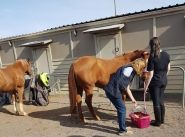 Equine program helping West Care clients take back the reins