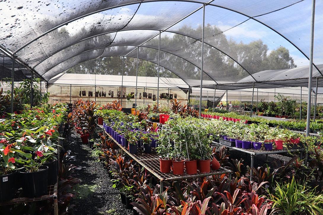 Bundamba plants
